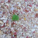 Pink Sand Warwick Long Bay - sea glass
