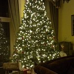 The wonderful Christmas tree!