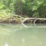 tree down on Courtois River