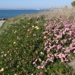 Beach and flower bed of the hotel