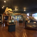 Photo of The Whale Museum
