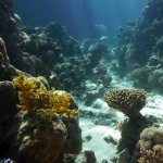 The underwater world from a different view