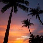 Sunset Cove Foto