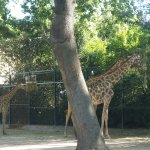 Photo of Lisbon Zoo