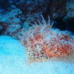 Foto di Manta Diving Lanzarote