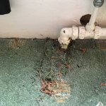 Worn carpets, previous occupants pants, syringe and broken glass outside the front door and a di