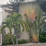 Fan palm on side of home
