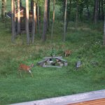 Property with an abundance of wildlife
