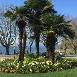 Palm trees at English Bay