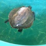 Foto di Sea Turtle, Inc.