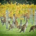 Margaret River winery & wildlife  - photo courtesy of Tourism WA