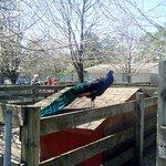 Popcorn Park Zoo