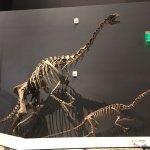 Foto de Natural History Museum of Utah