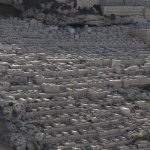 Mount of Olives Jewish Cemetery (7)