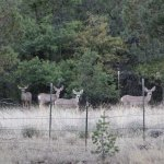 Deer on the Old Windmill Trail at Bear Mt Lodge