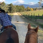 One of our guides and my horse's lovely head - this is road just leaving Bogong Horseback Advent