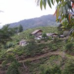 Photo of Hill Safari Eco Lodge Ohiya
