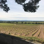 One of the vineyards we visited