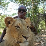 Up, close and personal with the king of the jungle!!!