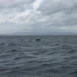 Photo of Dolphin Adventure