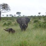 Foto di Umkumbe Safari Lodge