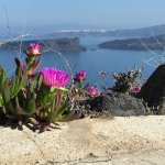 Spring flowers were universal looking over caldera from hotel