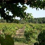 Foto van Le Clos des Vignes