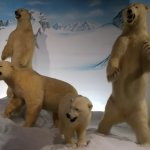 polar bears inside museum