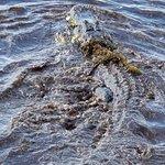 Foto di Alligator's Unlimited  Airboat Nature Tours