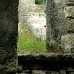 Walls and poppies