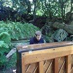 A piano inside the botanical garden