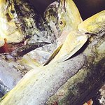 Local as it gets Mahi Mahi ! Thanks Capt. Cleve