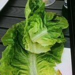 Dirty unwashed lettuce