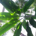 20150405_125134_large.jpg