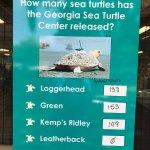 Georgia Sea Turtle Center Foto