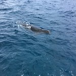 The seal who came to see us. She was chewing on our mooring line at the beginning.