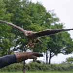 East Sussex Falconry