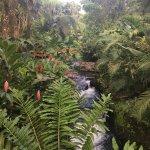 Foto de Tabacon Hot Springs