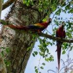 Carara National Park Foto