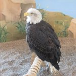 Columbia, eagle ambassador since 2003.
