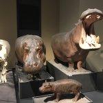 Photo of Museum fur Naturkunde (Natural History Museum)