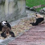 Panda Valley