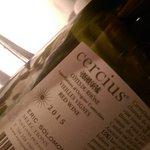 Cercius - named for mistral winds of Frnce