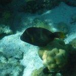 Foto di Barriera Corallina