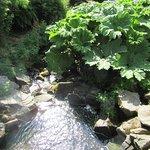 le petit ruisseau qui coule au milieu du parc.