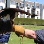 Falconary