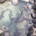Tiburones, mantarayas, muchísimos peces