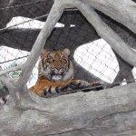 Tiger Exhibit Jacksonville Zoo