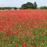 Photo of Akebonoyama Agricultural Park