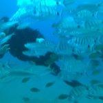 Photo de Submarine Safaris SL